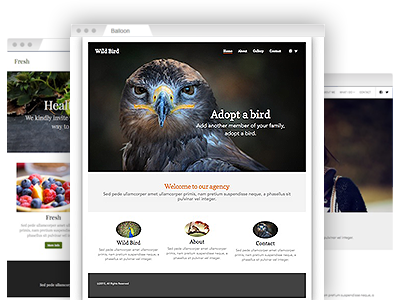 A variety of easy to re–design website themes